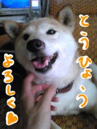 Image2315_4